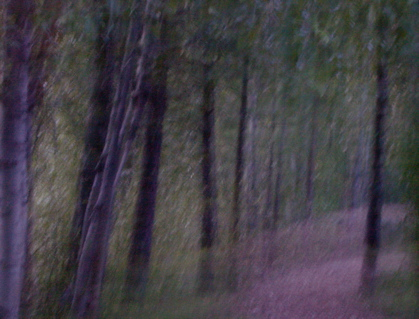 Pathwoods