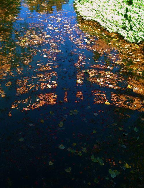Reflectionspond1